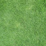 How to Make Bermuda grass Thicker